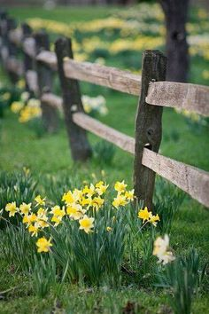 Country Spring with daffodils along split rail fence Country Fences, Rustic Fence, Wooden Fence, Brick Fence, Country Roads, Bamboo Fence, Cedar Fence, Split Rail Fence, Horizontal Fence