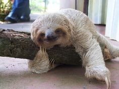 Thanks to Kristen Bell, I have a new love for sloths! - Want to be friends?