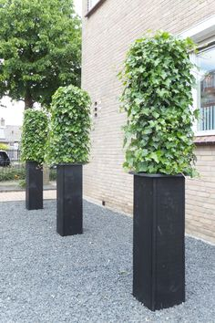 ONE YEAR LATER!!!!!!!  The evergreen Hedera, one of the most suitable Climbing plant to apply in the innovative growth system from Hivy Pillar Greenfashion. (made in Holland) www.hivypillar.nl