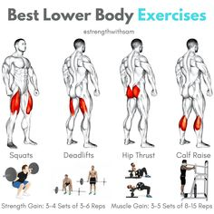 Quadriceps: Squats (Back or Front) Hamstrings: Conventional Deadlift Glutes: Hip Thrust Calves: Standing Calf Raise Body Training, Training Plan, Calf Raises, Squats, Calves, Routine, Exercise, Fitness, Gymnastics