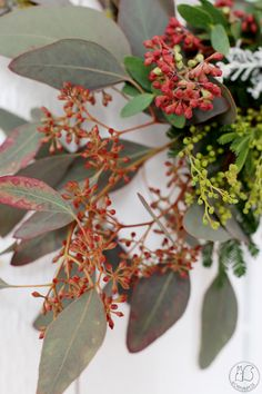 Oravanpesä: KRANSSITEHTAILUA. Plants, Red, Flora, Plant, Planting, Rouge