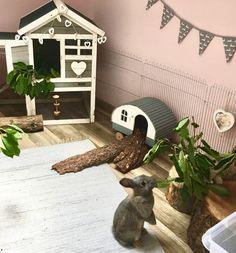 queencaylz// Bunny Cages, Rabbit Cages, Rabbit Toys, Pet Rabbit, Rabbit Habitat, Holland Lop Bunnies, Bunny Room, Indoor Rabbit, Bunny Hutch