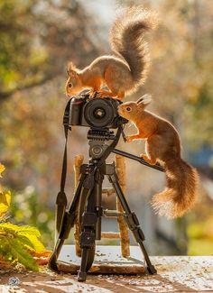camera squirrel man
