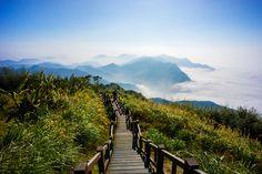 阿里山森林Alishan, Taiwan.
