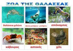 dreamskindergarten Το νηπιαγωγείο που ονειρεύομαι !: Λίστες αναφοράς για τα ψάρια και τα ζώα της θάλασσας Undersea World, Deep Sea Creatures, Underwater, Projects To Try, Ocean, Fish, Activities, Animals, Crafts