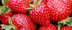 Erdbeeren sind süß und saftig im Geschmack und eine leckere Erfrischung an heißen Sommertagen. Erdbeeren sind weltweit die wohl bekanntesten Beeren und gehören zu den gesündesten Lebensmitteln. http://superfood-gesund.de/erdbeeren/