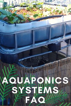 What are the benefits of Aquaponics? How many fish can I keep? How long until they grow to harvest size? What type of systems are there?   We cover off the most frequently asked questions regarding Aquaponics in this helpful article.