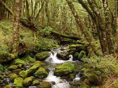 Beautiful stream.