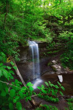 tall waterfall, Fall Hollow, copyright nps/marc muench - places to see along the Natchez Trace in Tennessee Great Places, Places To See, Natchez Trace, Small Waterfall, Park Service, Places Around The World, The Great Outdoors, Wonders Of The World, Places To Travel
