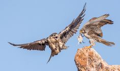 2016 Audubon Photography Awards - The Atlantic