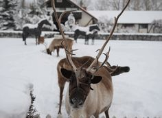 Reindeer games #Christmas