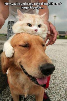 Dog Under control of cat