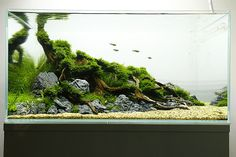 FTS 6 weeks | Flickr - Photo Sharing!