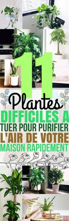 Je m'intéresse de plus en plus aux plantes d'intérieur. Elles ne servent pas seulement à rendre notre intérieur plus joli ! L'air...