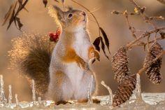 squirrel sun behind
