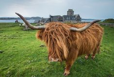 "120.7k Likes, 706 Comments - National Geographic Travel (@natgeotravel) on Instagram: ""Photo by @jeffmauritzen. A highland cow on the sacred isle of Iona, one of the Inner Hebrides of…"""