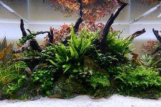 """150 Me gusta, 3 comentarios - George Farmer (@theaquascaper) en Instagram: """"Classic Nature Aquarium in an Aquascaper 600. Post-maintenance shot. Full video of maintenance…"""""""