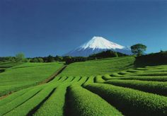 Another must do in Japan: See Mount Fuji (with tea fields in foreground, if possible).