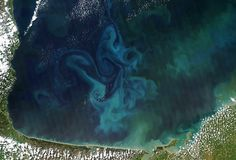 Phytoplankton going forth and multiplying, as seen from space. Photo by NASA/GSFC