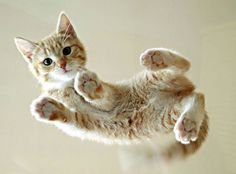 3 - 2 - 1 - LEVITATE!!! (No, seriously - pictures of cats on glass tables, taken from below...)
