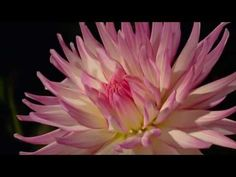 Blooming flowers, Amazing nature! - YouTube