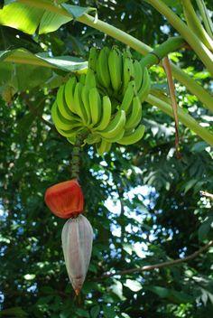 25 frutas y verduras que no tenías idea de cómo crecían y te dejarán con la boca abierta