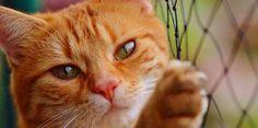 Los arañazos de los gatos pueden provocar infecciones y, en ciertos casos, hasta la muerte.    Un completo estudio llevado a cabo por cie...