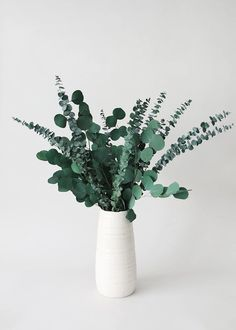 Spiral and Silver Dollar Eucalyptus in White Vase Dried Flower Arrangements, Dried Flowers, Eucalyptus Centerpiece, Mint Decor, Dried Eucalyptus, Green Vase, White Vases, Green Cleaning, Simple House