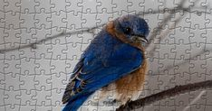 Free Online Jigsaw Puzzles, Blue Bird, Wallpaper, Animals, Beautiful, Animales, Animaux, Wallpapers, Wall Papers