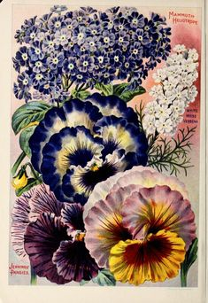 1916 Childs' Rare Flowers, Vegetables & Fruits