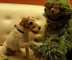 The Artist's Uggie didn't get a Best Dog nomination, but he still got an Oscar!