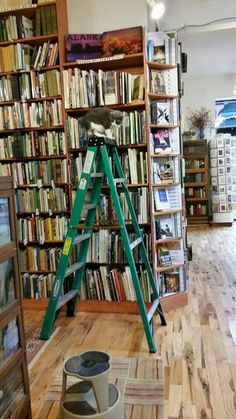 Need a book on a high self? Otis is here to help. (Loganberry Books)