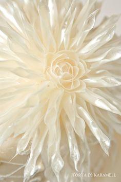White Photo by: Tortas Es Karamell Color Ivory, Vanilla Cream, French Vanilla, Vanilla Sky, Colour Board, Shades Of White, Ivoire, Creamy White, Mellow Yellow