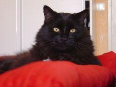 Mon Pluchon, qui restera pour toujours le plus gentil des chats! #PerleNoire