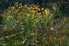 Garden Of Dreams Dreams, Garden, Flowers, Plants, Garten, Lawn And Garden, Gardens, Plant, Gardening