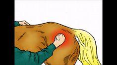 """Mitä ihmettä on Shiatsu-hevoshieronta? Miten se eroaa """"tavallisesta"""" hevoshieronnasta? Katso video ja lue uusi blogimerkintä aiheesta!   http://impulsoblogi.blogspot.fi/2016/11/mita-ihmetta-on-hevosshiatsu.html  Hevosshiatsu, hevoshieronta, hevoshieroja, Tampere, Jämsä"""
