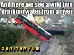 and here we see a wild bus drinking water from a river. Ha ha #funny #humor