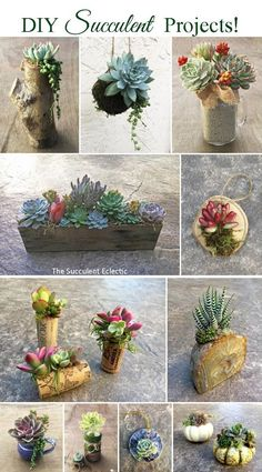 Succulent DIYs and projects are easy to make with living plants. Enjoy these crafts for months & years. Succulent Gifts, Succulent Bouquet, Succulent Gardening, Succulent Care, Succulent Terrarium, Planting Succulents, Succulent Decorations, Succulents Drawing, Indoor Succulents