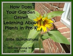 little illuminations: How Does Your Garden Grow? Learning About Plants i...