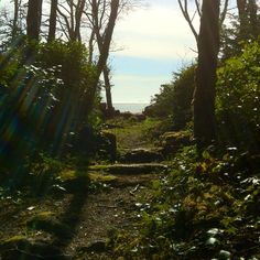A small path to Pachena Bay, Vancouver Island. One of the island gems. Owned by the Huu-ay-aht First Nations.