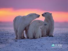 Machen Sie den IFAW zum Hintergrundbild auf Ihrem Desktop oder Mobilgerät   IFAW - International Fund for Animal Welfare