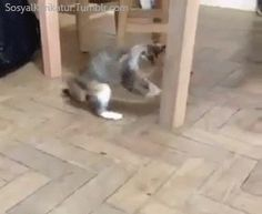 What Is The Cat Funny Gif #47410 - Funny Cat Gifs|Funny Gifs|Cat Gifs