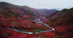 Richard Mosse, Love Is The Drug, 2012. Image courtesy of the artist and Jack Shainman Gallery, New York.