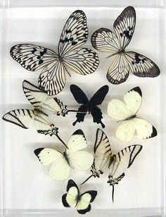 #PANDORAloves butterflies in black and white #springfeeling