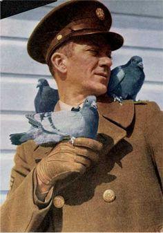 """The Flight"" a short film by Al Croseri, ""In memory of Homing Pigeons in Combat. Pigeon Nest, Le Pigeon, Racing Pigeon Lofts, Army Dogs, Homing Pigeons, Mourning Dove, Backyard Birds, Spirit Animal, Beautiful Birds"