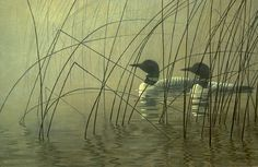 Misty Morning – Loons (1980) - Robert Bateman
