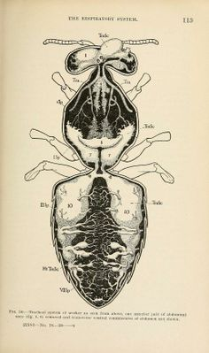 Pin by oimoi doy on Star Clock | Pinterest | Anatomy and Bees