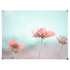 Wood wall decor featuring a photographic image of pink flowers against a turquoise background.   Product: Wall artConstr...