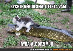 Or the X Games - LOLcats is the best place to find and submit funny cat memes and other silly cat materials to share with the world. We find the funny cats that make you LOL so that you don't have to. Save Animals, Animals And Pets, Funny Animals, Tiny Cats, Funny Cats And Dogs, Funny Phrases, Cat Quotes, Funny Cat Memes, Cool Pets