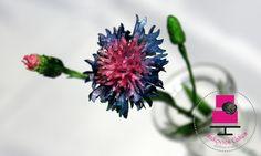 cornflower - chrpa